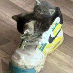 Kittens in a shoe